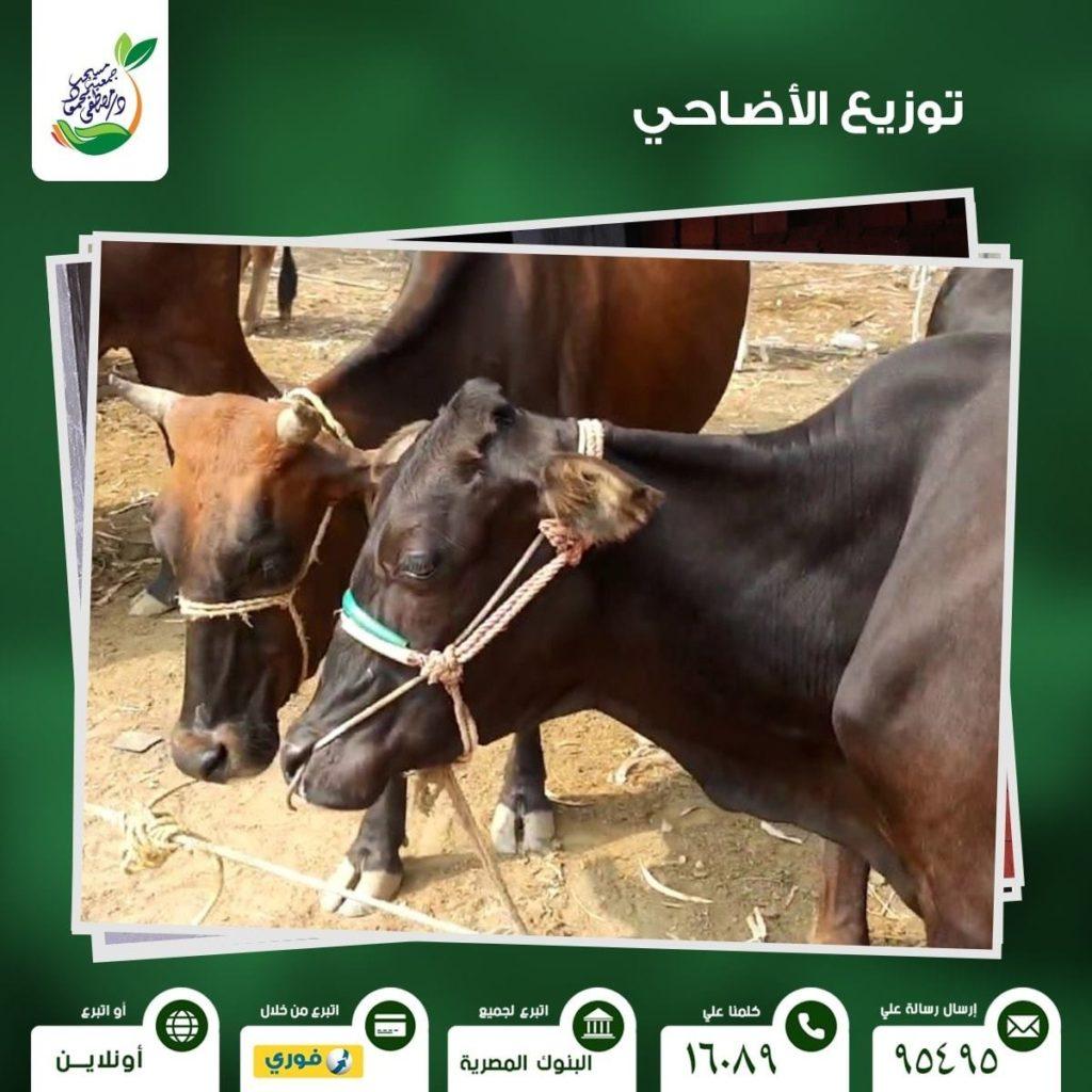 الأضاحي بجمعية مصطفى محمود